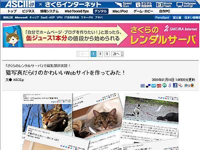 猫写真だらけのかわいいWebサイトを作ってみた!